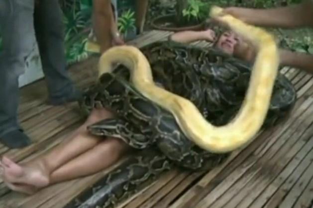 Video: pythons masseren je rug als volleerde masseurs