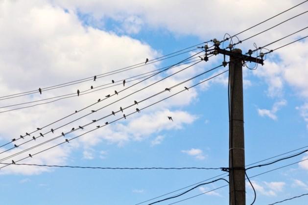 Jaarlijks sterven half miljoen vogels door hoogspanningslijnen