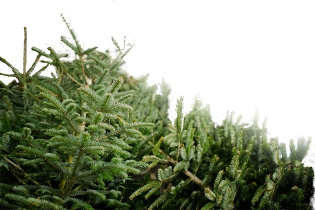 Kerstboomdief betrapt die 'op bestelling' werkte