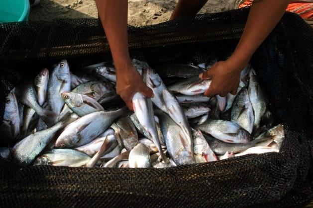 Hongersnood dreigt door overbevissing