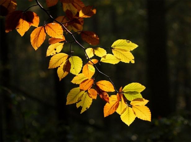 Heerlijk herfstweer op komst dit weekend