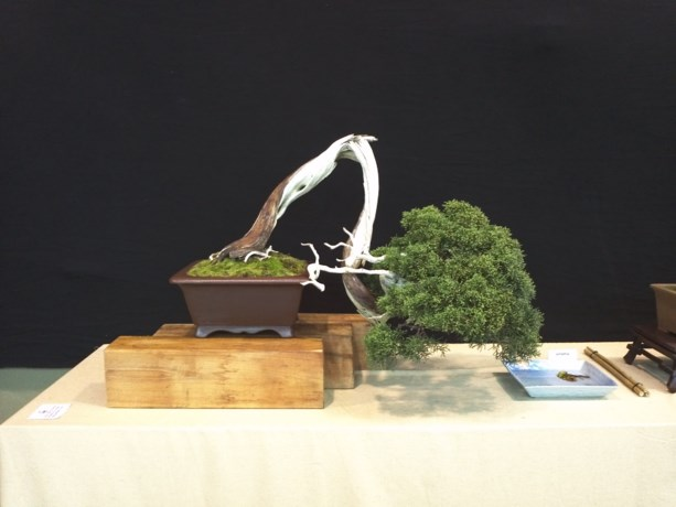 Bonsaiclub Miyagi houdt eerste tentoonstelling