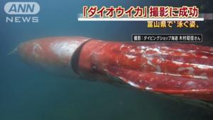 Visser treft gigantisch zeemonster aan voor Japanse kust