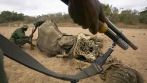 Stropers doden 500 olifanten in Zuid-Soedan