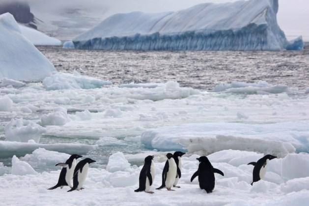 150.000 pinguïns sterven door gigantische ijsberg