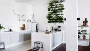 Plantenhype in huis