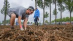 VIDEO. Organisatie probeert Werchter-modder in te dijken