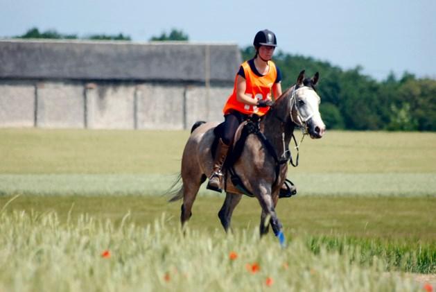 Twee verwaarloosde paarden in Lozen in beslag genomen