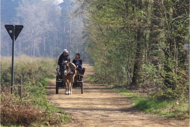 Dood paard gevonden in Vogelsanckbos in Heusden-Zolder