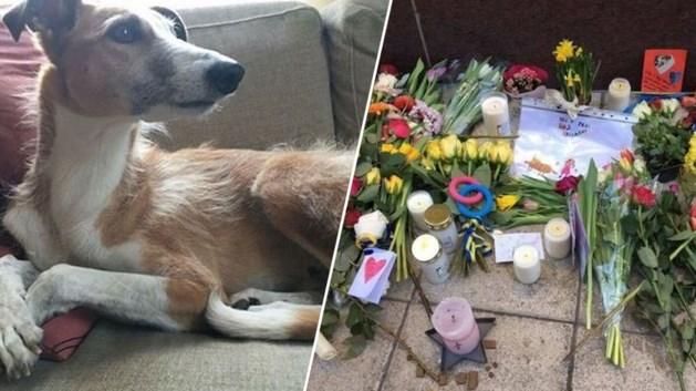 Pakkend eerbetoon voor Iggy, de viervoeter die omkwam bij terreuraanslag in Stockholm