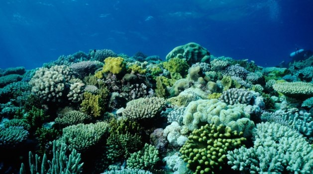 Verbleking Great Barrier Reef kan 750 miljoen dollar kosten