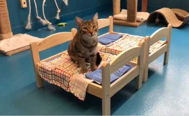 Ikea schenkt poppenbedjes aan dierenasiel om katten warme slaapplaats te geven
