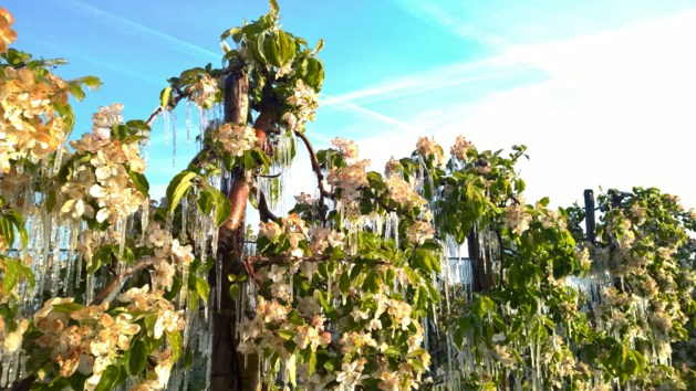 """OVERZICHT. Rampnacht voor fruitsector, rook over Zuid-Limburg """"wel degelijk schadelijk"""""""