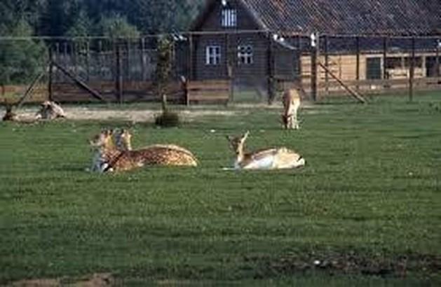 Vier herten overleden na eten van xtc