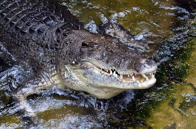 Brandweer blust woning en ontdekt 4 meter lange krokodil