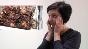 """VIDEO. Composteren zonder tuin? De wormenbak: """"Eten die dat allemaal op?!"""""""