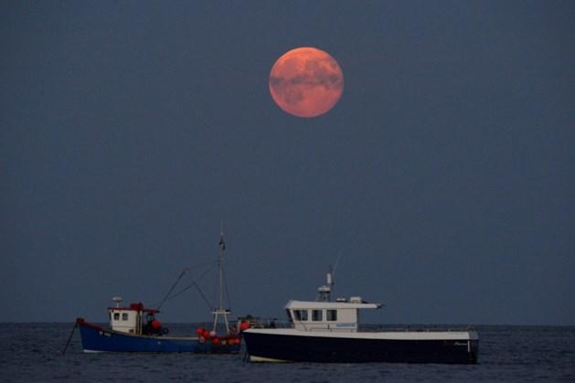 Londen stapt uit visserij-akkoord dat Belgische schepen toelaat te vissen nabij kust