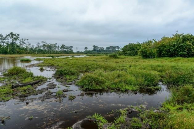 Elf parkwachters en Amerikaanse journaliste ontvoerd in Congolees reservaat
