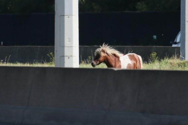 Ontsnapte pony belandt op middenberm E19