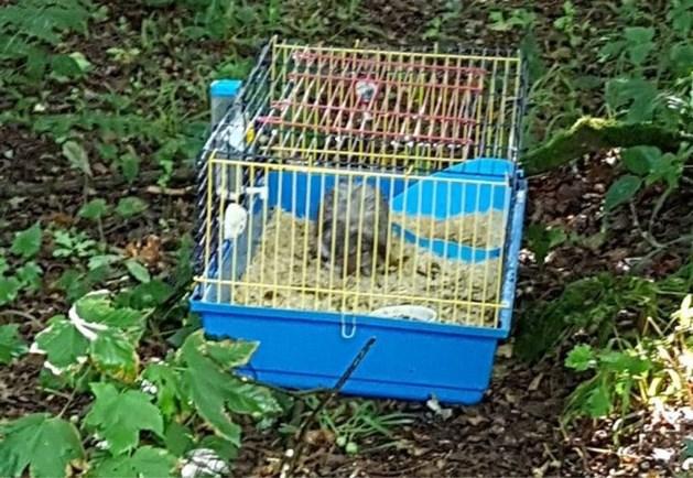 """Vrouw vindt natgeregend konijntje in kooi in bos: """"Wat een vreselijke streek"""""""