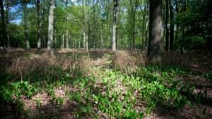 Vrouw overleeft twee weken in Waalse bossen