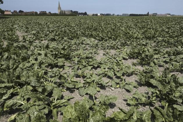 Kritieke situatie door droogte geweken door juliregen, maar grondwaterstanden blijven laag
