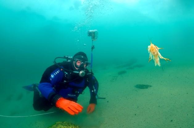 Vijf duikers omgekomen bij bootongeval in Thailand