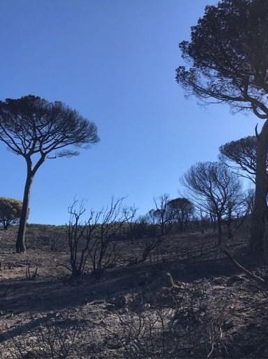 IN BEELD. Zo ziet stadje Ramatuelle eruit na bosbranden in Côte d'Azur