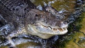 """Journalist Financial Times """"gegrepen door krokodil terwijl hij handen waste na toiletbezoek"""""""