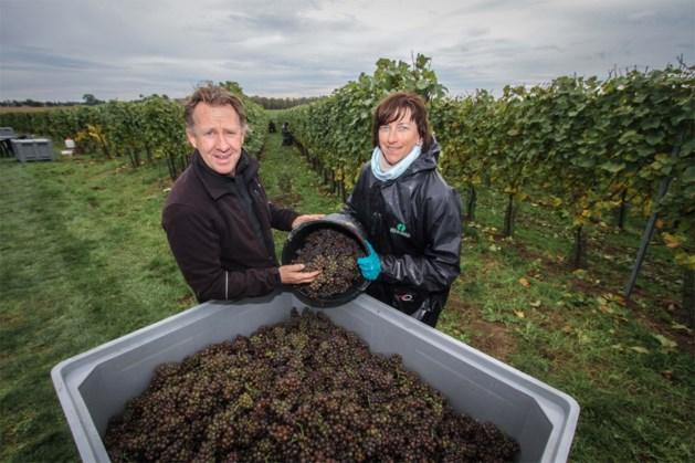 Limburg boven op verkiezing Beste Belgische wijn