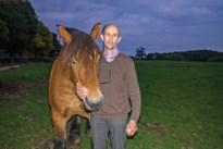 Paard doodgeschoten aangetroffen in weide in Voeren
