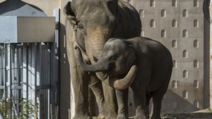Recordjaar voor Planckendael, ook meer dan miljoen bezoekers voor Antwerpse Zoo