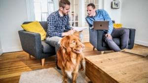 """Een viervoeter onder de collega's: """"Een kantoorhond is niet alleen leuk maar ook gezond"""""""
