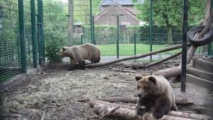 Broer en zus beer verhuizen naar zoo in Schotland
