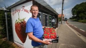 Goedkope aardbeien worden iets duurder