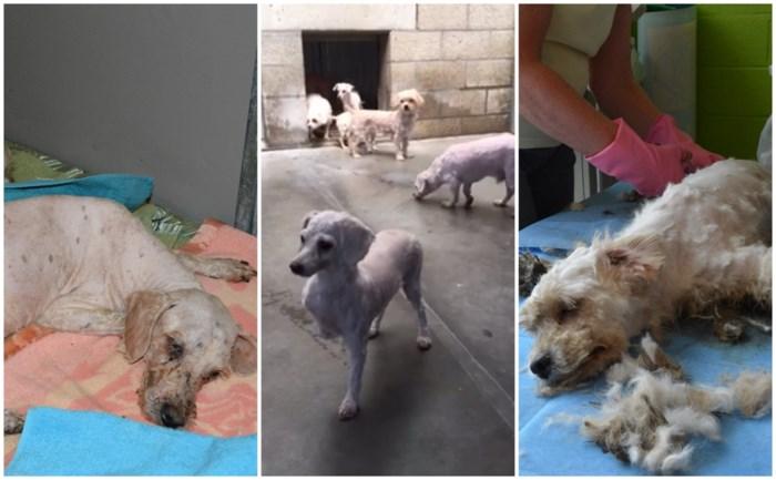 """Twintig verwaarloosde honden in woning gevonden: """"Zoiets hebben we nog nooit gezien"""""""