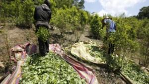 Colombia zet opnieuw glyfosaat in tegen cocaplantages
