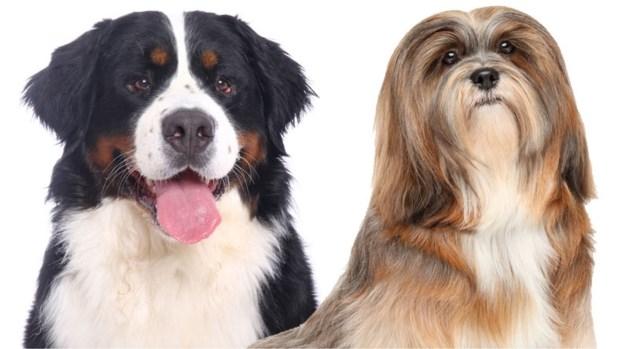 Twee honden sterven nadat ze urenlang werden achtergelaten in snikhete wagen