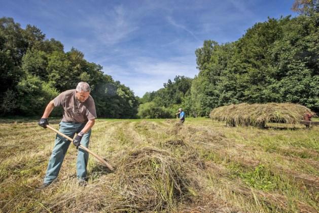 Herstelproject heischraal en blauwgrasland in provinciedomein Nieuwenhoven