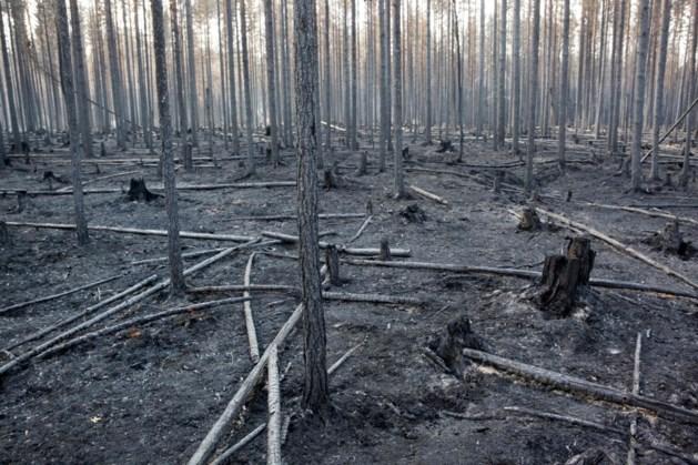 Aantal bosbranden in Zweden daalt