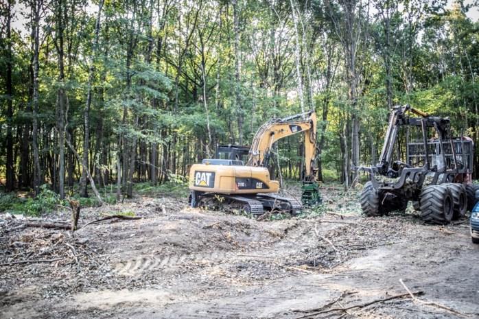 """Eerste bomen tegen de vlakte voor vakantiedomein Terhills: """"Jammer dat eeuwenoud bos zo verdwijnt"""""""