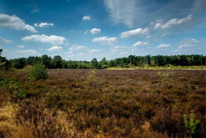 Vallende bladeren en eikels: Limburgse bos en hei nu al in herfstmodus