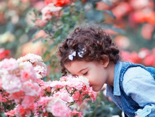 Met deze bloemen en planten geef je je tuin een lekker geurtje