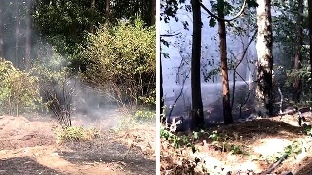 Brandweer blust met man en macht bosbrand aan Europark