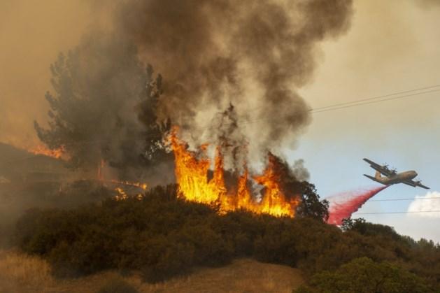 """Minister VS: """"Bosbranden zijn niet schuld van klimaatverandering, wel van milieuactivisten"""""""