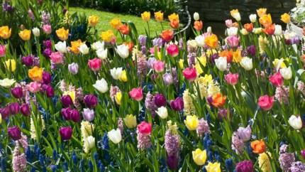 Meng uw bloembollen eens en breng zo meer kleur in uw tuin
