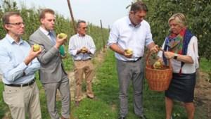 Boerenbond wil ook plukkers buiten Europa halen: