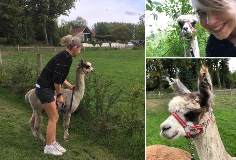 GETEST. Op wandel met een alpaca