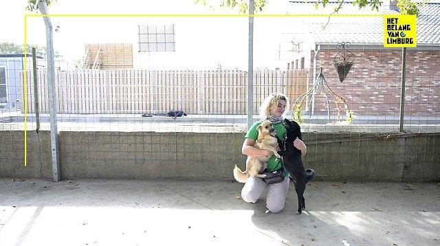 "Dierenasiel in Ophoven overvol na grote inbeslagnames: ""Plots 33 honden erbij, dat kan ons asiel niet aan"""