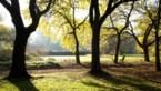 Zomer in de herfst: dit jaar al 125 'lentedagen'